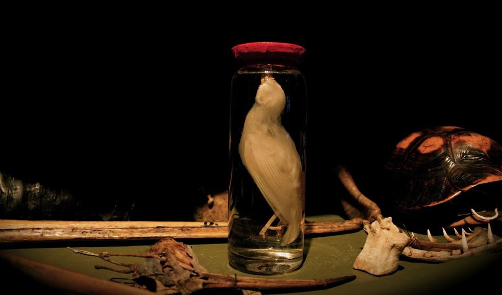 Bottle Bird (Wunderkammer Series)