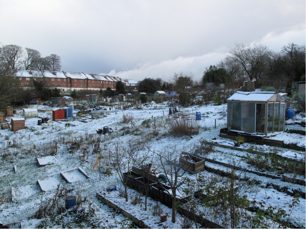 Liam Campbell: Winter Allotments, photograph, image courtesy the artist.